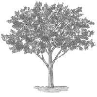 bomen tot 2 meter