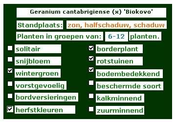 Geranium cantabrigiense x biokovo