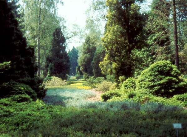 tips voor de aanleg van een wilde tuin minimum aan onderhoud