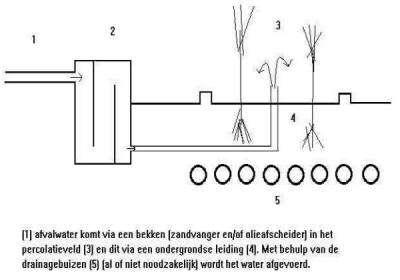 Bouw zelf een zuiveringsstation met riet of moerasplanten for Zelf zwemvijver aanleggen kostprijs