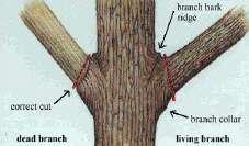 Snoeien van Bomen(243500609)