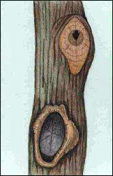 Snoeien van Bomen(664490385)